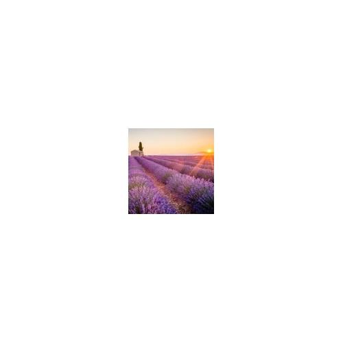 La Provence de Manon