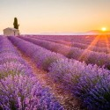 Parfums, fragrances Provence de Manon